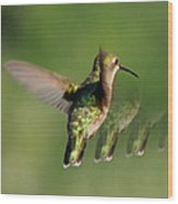 Honey Bird Flying Backwards Wood Print