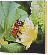 Honeybee And Cantalope Wood Print