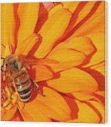 Honeybee On An Orange Zinnia Wood Print