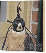 Hooded Barbary Falcon Wood Print