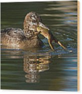 Hooded Merganser And Bullfrog Wood Print