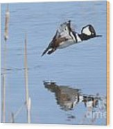 Hooded Merganser Flying Wood Print