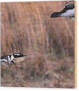 Hooded Merganser Gaining Altitude Wood Print