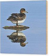 Hooded Merganser Reflection Wood Print