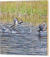 Hooded Mergansers Take Flight Wood Print by Lynda Dawson-Youngclaus