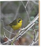 Hooded Warbler Wood Print