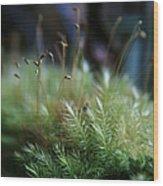 Hoomalumalu Kuhiwa Synchronicity Wood Print