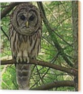 Hoot Hoo Dee Hoo Wood Print