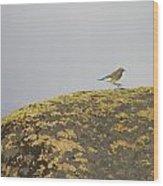 Hopping Blue Bird Wood Print