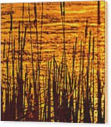 Horicon Cattail Marsh Wisconsin Wood Print