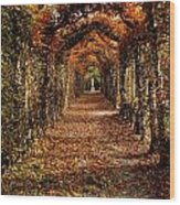 Hornbeam Alles, Birr Castle, Co Offaly Wood Print