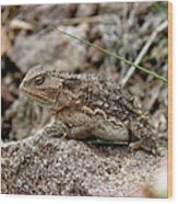 Horned Toad Wood Print