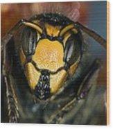 Hornet Head Wood Print