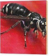 Hornet On Red Wood Print
