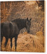 Horse And The Haystack Wood Print