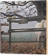 Horse At Fence Wood Print