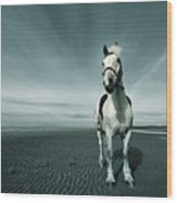 Horse At Irvine Beach Wood Print by Mikeimages
