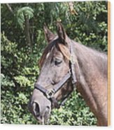 Horse At Mule Day In Benson Wood Print