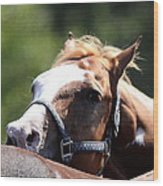 Horse At Mule Days 2012 - Benson Wood Print