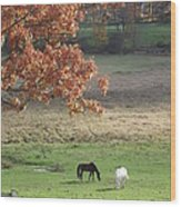 Horse Barn Hill Pasture Wood Print
