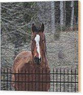Horse Behind The Fence Wood Print