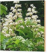 Horse Chestnut Blossoms Wood Print