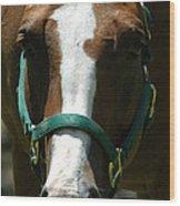 Horse Face Wood Print