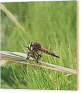 Horse Fly Close-up Wood Print