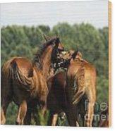 Horse Foul Play IIi Wood Print