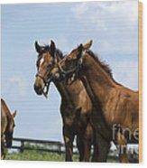 Horse Foul Play Vi Wood Print