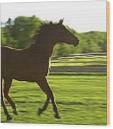 Horse Galloping Wood Print