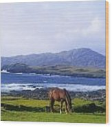 Horse Grazing In A Field, Beara Wood Print by The Irish Image Collection