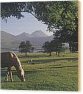 Horse Grazing On A Landscape Wood Print