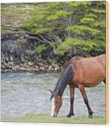 Horse Grazing Wood Print by Thanks for choosing my photos.