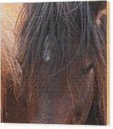 Horse Hair 2 Wood Print