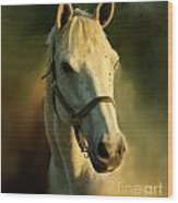 Horse Head Portriat Wood Print