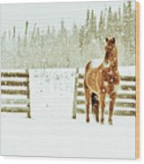 Horse In A Snowstorm Wood Print by Roberta Murray - Uncommon Depth