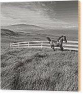 Horse In Pasture Wood Print