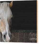 Horse In The Stable Wood Print