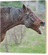 Horse Laugh Wood Print