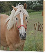 Horse Miss You Wood Print