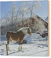 Horse On Maine Farm After Snow And Ice Storm Wood Print