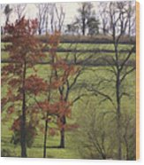 Horse On The Pasture Wood Print