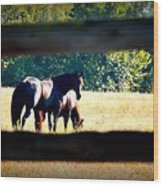 Horse Photography Wood Print