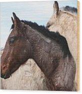 Horse Pileup Wood Print