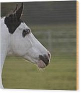 Horse Portrait Wood Print by Ralf Kaiser