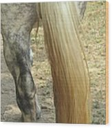 Horse-tale Wood Print by Todd Sherlock