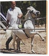 Horse Training Wood Print