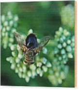 Horsefly No Bother Me Wood Print