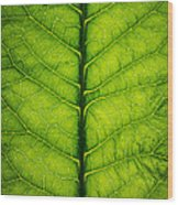 Horseradish Leaf Wood Print